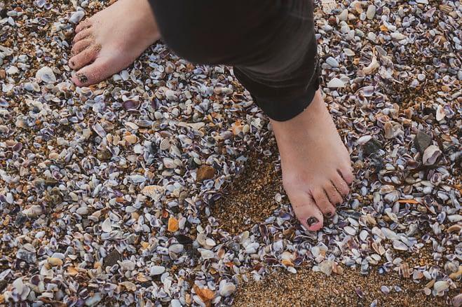 tiny shells on a beach